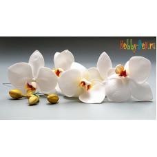 Ветка с Орхидеями